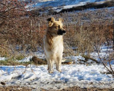 Севастопольский Хатико ждёт хозяина