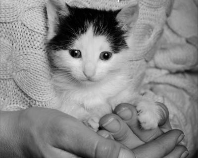 «Новогодний Календарь-2017» от Севастопольского фонда помощи бездомным животным