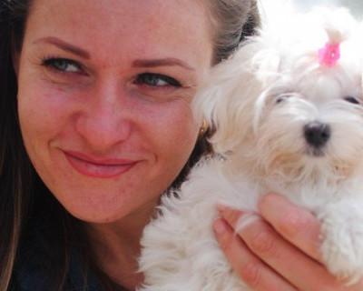 Новогоднее поздравление от Севастопольского благотворительного фонда помощи бездомным животным