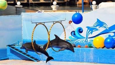 Без разрешительных документов вот уже четвертый год работает Севастопольский дельфинарий