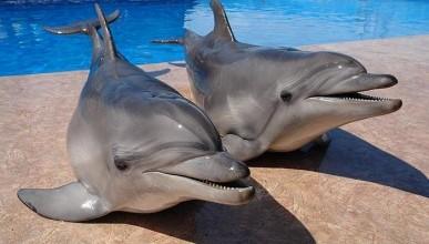 Продолжаются капризы вокруг темы Севастопольского дельфинария