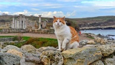 Коты Херсонеса - хранители древностей, бойцы невидимого фронта
