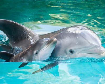 Ультразвук дельфинов разбудит севастопольцев после зимней спячки?