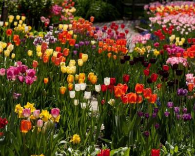 В Севастополе разыскивается похитительница цветов у «Доброго Сусанина»