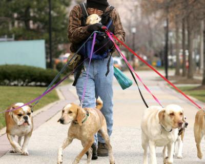 Севастопольские дети гуляют на местах выгула собак или наоборот?