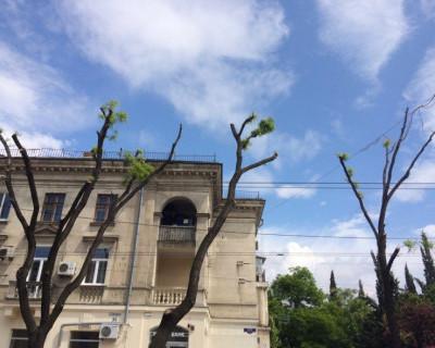 В Севастополе провели обрезку деревьев: спасли или покалечили?