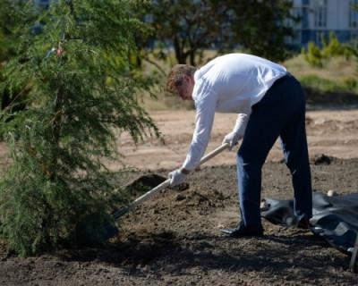 В Севастополе заложили Аллею героев спорта «Динамовский лес»