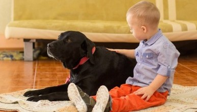 Единственная в Крыму собака-терапевт способна протянуть лапу помощи