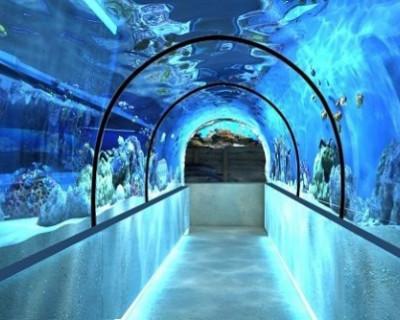 В Алуштинском аквариуме может появиться водный тоннель