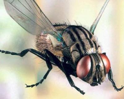 Некто летающий «Че» присел на головы севастопольцев?