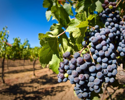 В Крыму строительная и винодельческая отрасли не готовы к переходу на российские нормы