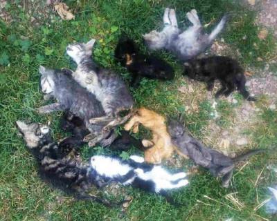 Пристроенные на лютую смерть: в боксе «Севастопольского центра защиты животных «Жизнь» найдены трупы