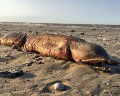 В Сети обсуждают неведомое существо, выброшенное ураганом на берег