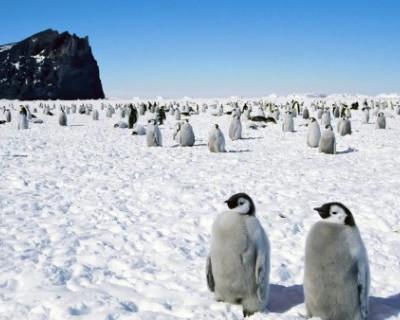 Над Антарктидой поднимут флаг Крыма
