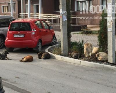 Жители Севастополя просят избавить севастопольские дворы от свор огромных бродячих собак