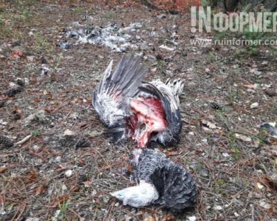 Убили животных, доберутся до людей? Жители Терновки боятся выйти из дома (жуткие фото)