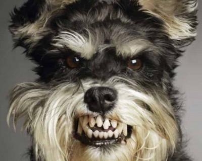 Крым и Севастополь «захватили» собаки-убийцы?