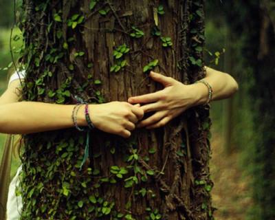 Каждому дереву в Ласпи понятно, а до «команды Чалого» всё никак не дойдёт?