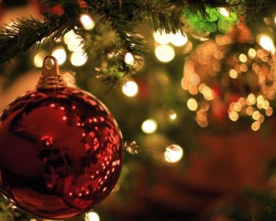 К севастопольцам песец подкрадётся незаметно... Или здравствуй, ёлка, Новый год!