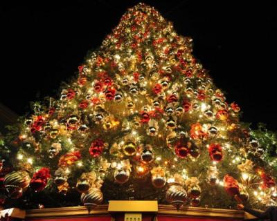 В Севастополе стартует новогодний марафон – на площади «зажгут» главную ёлку города