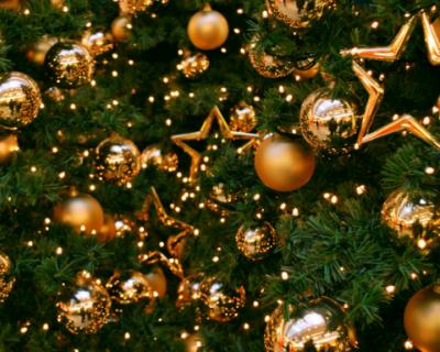 Где и за сколько можно купить в Севастополе новогоднюю ёлку? (ФОТОРЕПОРТАЖ)