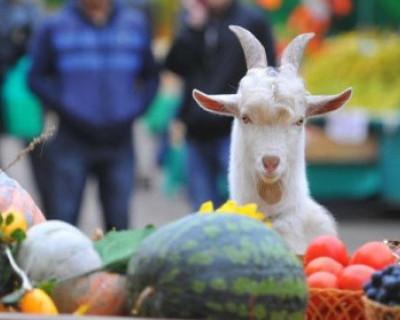 В Севастополе откроется ряд фермерских ярмарок с низкими ценами и бесплатными местами (АДРЕСА)