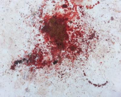 Кровавое воскресенье в Севастополе