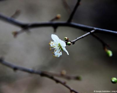 В Севастополе, похоже, начинается весна…