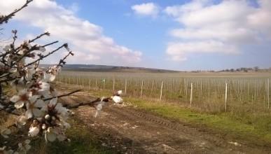 «Золотая Балка» держит курс на обновление виноградников (ФОТО)