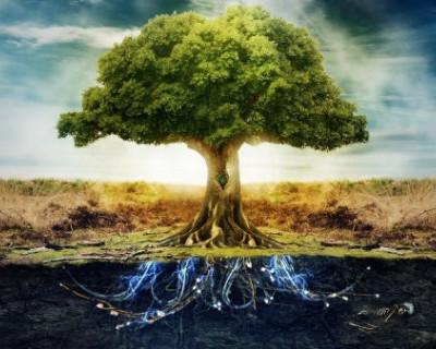 Севастопольцев ждёт «Минитопия и волшебный плод»
