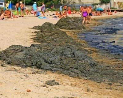 В украинском море «побрезгуют купаться даже свиньи»