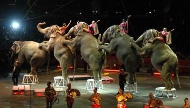 «Севастопольские мамы» сводили детей в цирк