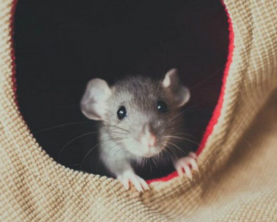 «Грязища и крысятник»