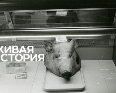 Люди, пережившие ровно 20 лет назад ужас в России, с содроганием вспоминают этот день