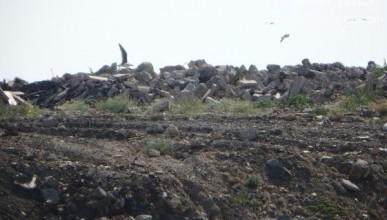 Где в Севастополе «живет» мусор