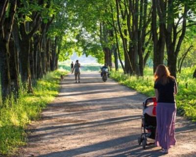 В Севастополе вовсю благоустраивают зеленые зоны