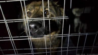 Пора чиновникам Севастополя показать «собачью жизнь» в приюте?