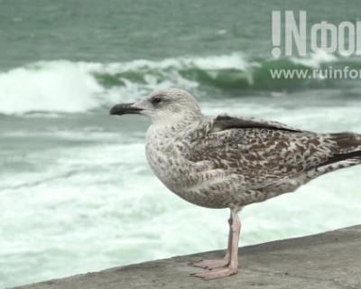 Бушующее море в Севастополе: величие и беспредельность (ВИДЕО)