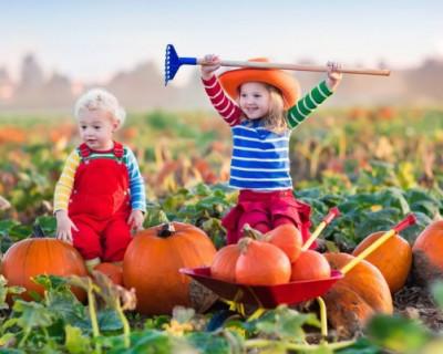 Все на поле! Севастопольских мам и детишек приглашают собрать урожай