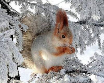 Россияне смеются над идеей украинского депутата запретить зиму