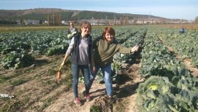 Трудовой десант севастопольских мам собрал на полях 10 тонн овощей!
