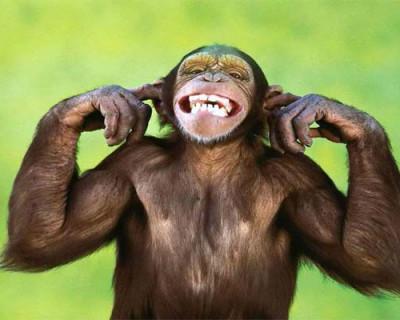 Человек произошёл от обезьяны? А севастопольские депутаты?