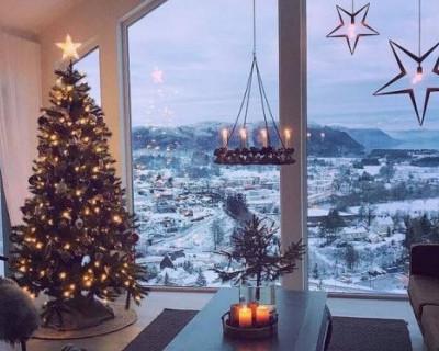 Где в Севастополе купить новогоднюю ёлку (АДРЕСА)
