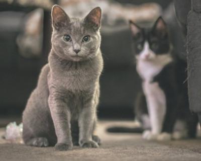 Депутаты Госдумы запретили россиянам выбрасывать домашних животных