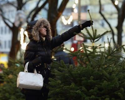 Где и за сколько купить ёлку в Севастополе?