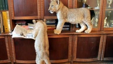 Депутат Заксобрания требует запретить держать в квартирах домашних животных