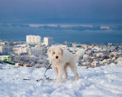 «Рождественская сказка» в Крыму и Севастополе (ФОТО, ВИДЕО)
