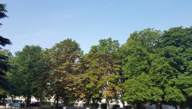 Стало известно, как в Севастополе ухаживают за деревьями