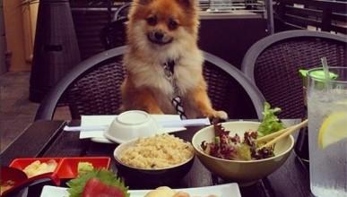 Московские собаки живут лучше, чем севастопольские пенсионеры?