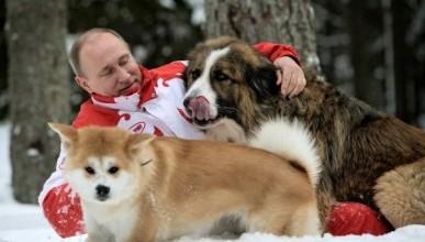 Верные псы Путина